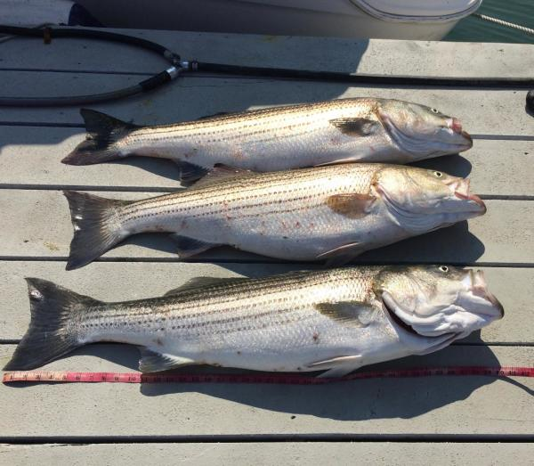 Half & Full Day Charters